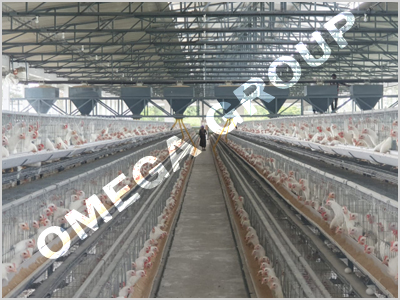 Conventional layer cage system