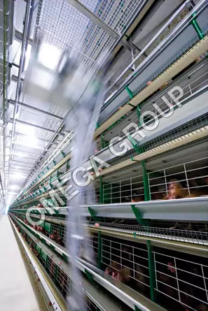 Fully Automatic Battery Cage for Layers Zucam